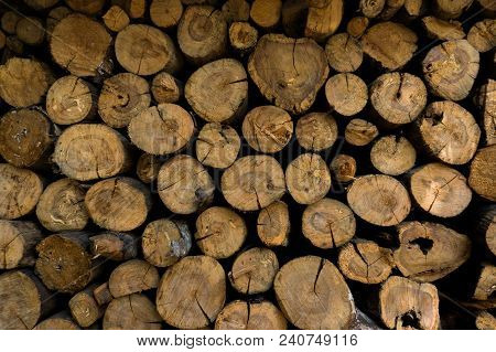 Closeup Of A Pile Of Logs Showing The Cross Sections,looking At The Cross Section Cuts,the Pattern O