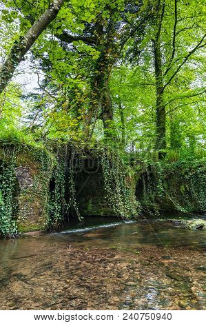 Tiny River In The Irish Countryside Surrounded By Trees And Vegetation