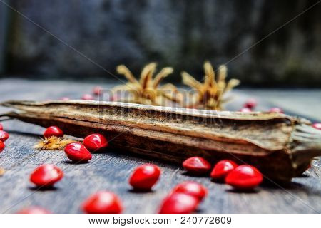 Dried Okra Seed On Black Wood With Red Hard Seed And Tiliaceum Seed