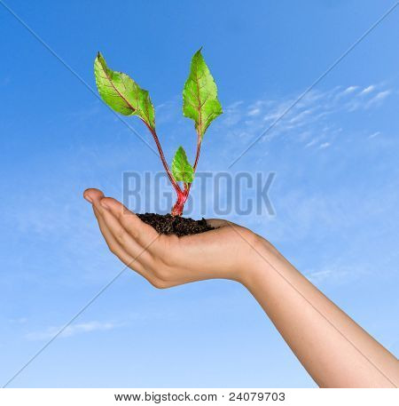 Girl With Sprout Of Beet In Hand