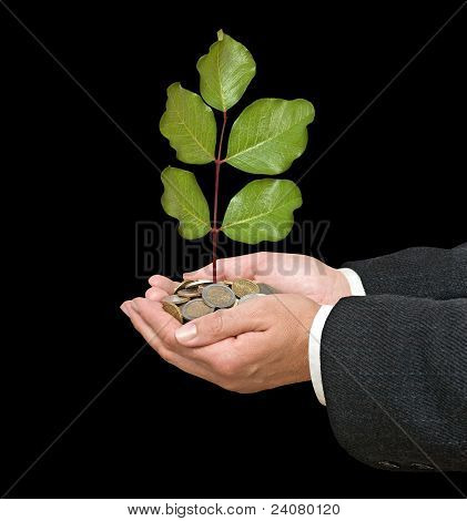 Palm With A Sapling Growng From Pile Of Coins