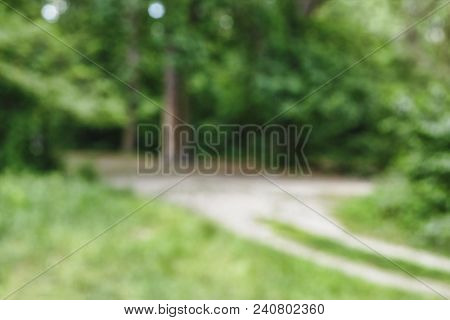 Background Blur. Background Blurred Image Of A Summer Forest. Summer, City Park, Forest. Abstract Bl