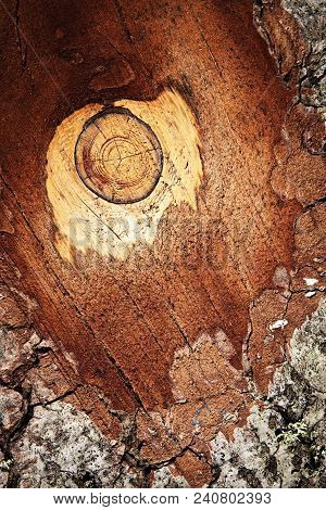 Abstract Background Detail Fir Bark The Branches Sawn