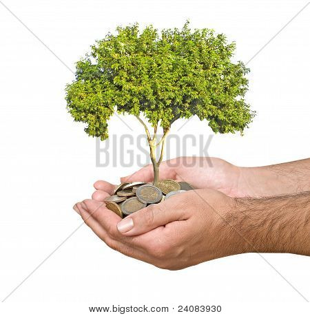 Palms With A Sapling Growng From Pile Of Coins