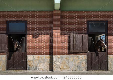 Brown Horses Looking Over The Stable Door