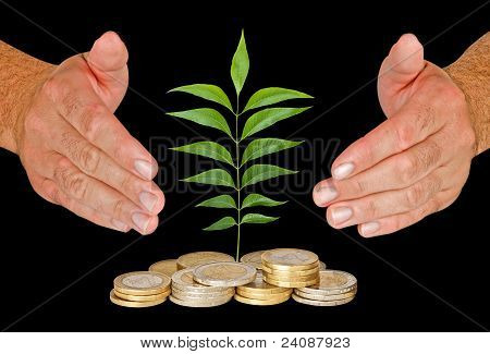 Sapling Protectrd By Hands