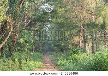 Walkway Lane Path With Green Trees In Forest. Beautiful Alley In Park.out Focus