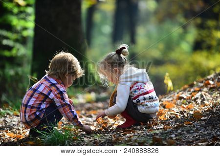 Kids Activity And Active Rest. Children Pick Acorns From Oak Trees. Brother And Sister Camping In Au