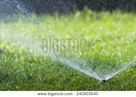 Lawn Water Sprinkler Spraying Water Over Grass In Garden On A Hot Summer Day. Automatic Watering Law