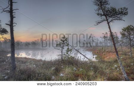 Sunrise At Swamp With Small Pine Trees Covered In Early Morning. Kemeri National Park At Sunrise, La