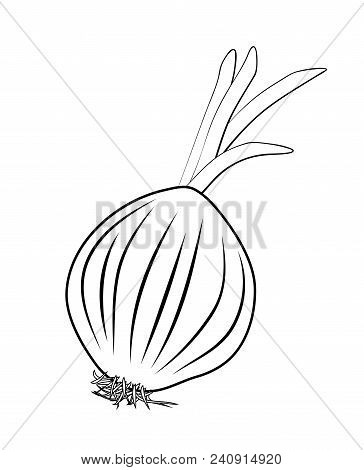 Vector Illustration, Isolated Onion Shallot Root In Black And White Colors, Outline Hand Painted Dra
