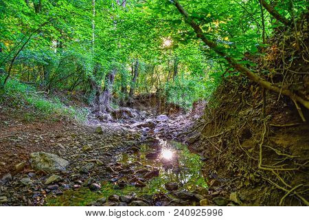 A creekbed landscape with the sun shining through lush green trees and reflecting in the water below.
