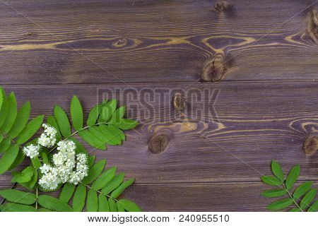 Flat Lay. Branches Of Spring Trees With Flowers