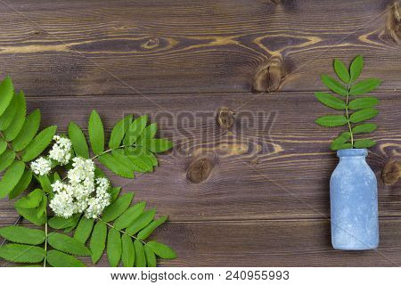Branches Of Spring Trees With Flowers And A Small Bottle