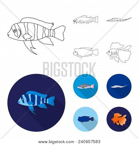 Frontosa, Cichlid, Phractocephalus Hemioliopterus.fish Set Collection Icons In Outline, Flat Style V