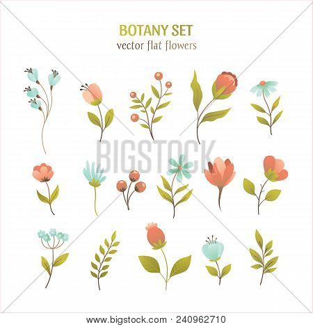 Vector Flower Simple Flat Botany Collection Isolated On White Background. Set Of Floral And Herb Ele