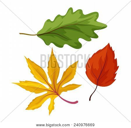 Sketch Maple Oak Aspen And Birch Tree Dry And Green Leaves Set. Hand Drawn Autumn Forest, Fall Symbo