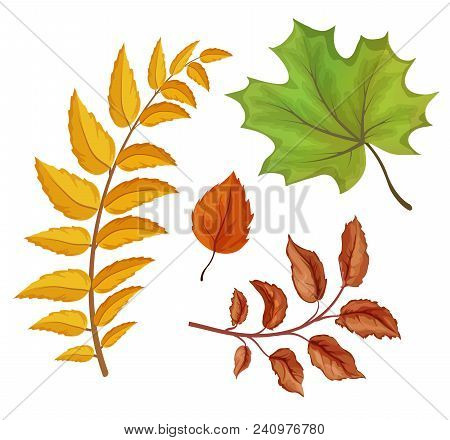 Sketch Maple Oak Aspen And Larch Tree Dry And Green Leaves Set. Hand Drawn Autumn Forest, Fall Symbo