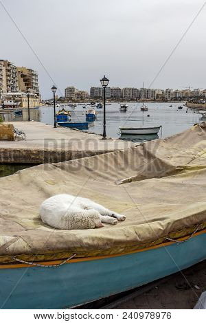 Maltese Street Life. Stray Cat Rolled Up On A Covered Boat At Spinola Bay, St. Julian's, Malta