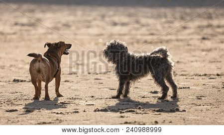 Playful Animals, Pets Outside Concept. Two Mongrel Dogs Playing Together On Sandy Beach. Outdoor Sho