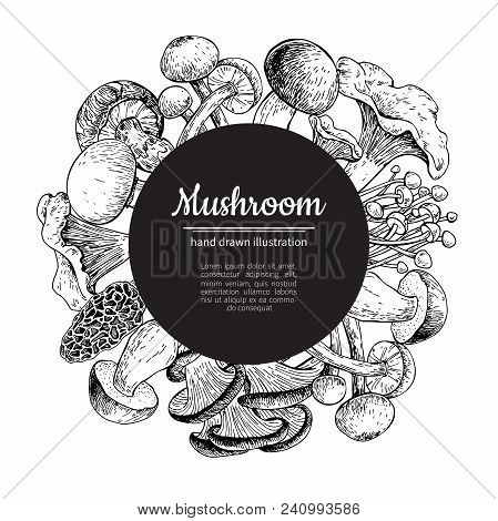 Mushroom Hand Drawn Vector Frame. Isolated Sketch Organic Food Drawing Template. Champignon, Morel,