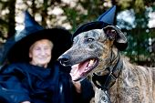 Greyhound dog and senior lady in witch costume poster