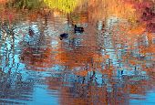 New England; trees in a full glory of autumn colors reflected in a blue water poster