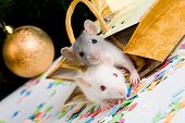 Image of two mice looking at camera in gift package poster