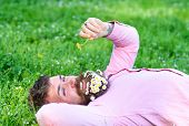 Macho with daisies in beard relaxing. Bearded man with daisy flowers in beard lay on grassplot, grass background. Peace and tranquility concept. Man with beard on smiling face sniffs dandelion. poster
