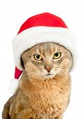 Cat in Santa Claus red hat isolated on white background poster