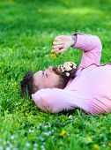 Man with beard on calm face sniffs dandelion. Peace and tranquility concept. Bearded man with daisy flowers in beard lay on grassplot, grass background. Guy with bouquet of daisies in beard relaxing. poster