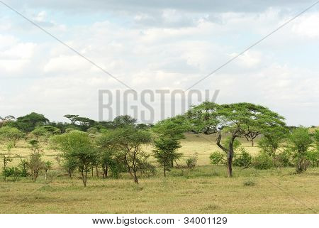 Typical Serengeti Landscape