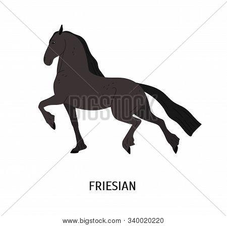 Friesian Horse Flat Vector Illustration. Purebred Frizian Stallion Isolated On White Background. Bla