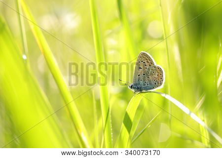 Blue Butterfly spring morning  Nature background Butterfly green grass meadow Nature background Macro Close-up Nature background summer Nature background sun sunshine Nature background Natural environment Nature background Butterflies Nature background.