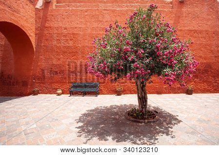 Monastery Of Santa Catalina, Arequipa, Peru, Flowering Tree View. A Flowering Tree Grows In The Cour