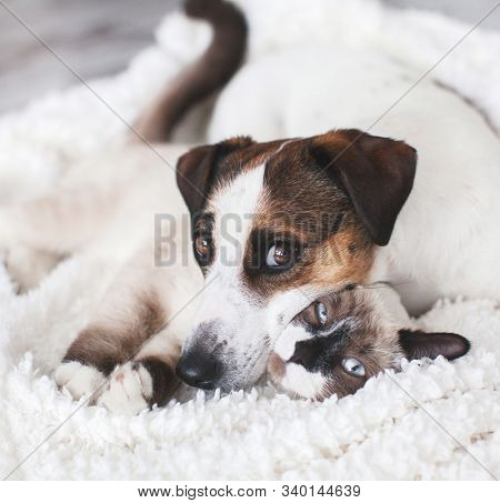 Cat and dog together on white plaid. Friendship kitten and puppy. Dog and cat friends