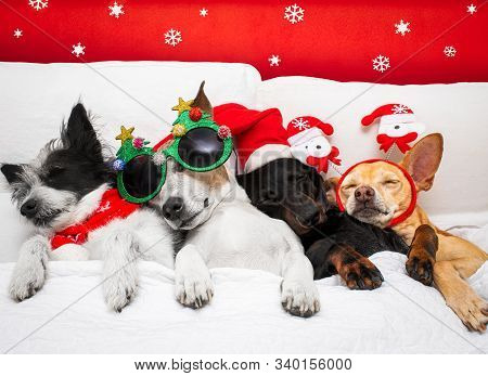 Christmas Santa Claus Row And Group Of  Dogs As A Holiday Season Sleeping Hangover, Rest Relax, Cudd