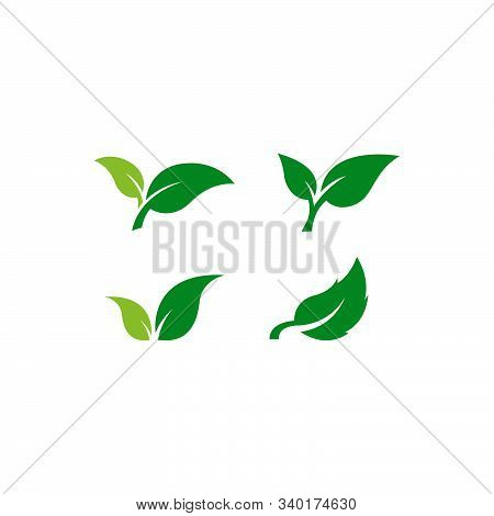 Set Of Green Leaf Icon. Eco Symbol Vector Illustration