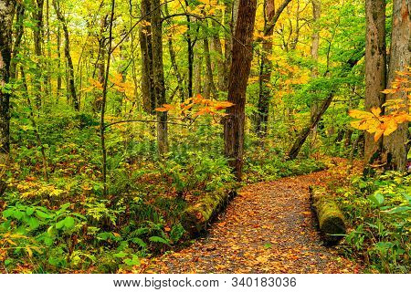 View Of Oirase Stream Walking Trail In Colorful Foliage Of Autumn Season Forest At Oirase Gorge In T