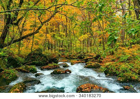 View Of Oirase River Flow Passing Green Mossy Rocks Covered With Falling Leaves In Colorful Foliage