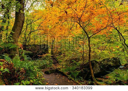 View Of Oirase Stream Walking Trail In The Colorful Foliage Of Autumn Season Forest At Oirase Valley