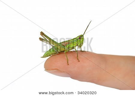 Green friend