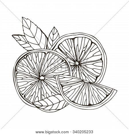 Hand Drawn Vector Illustration Of Lemon, Itrus, Lime. Isolated On White Background. Tropical Summer
