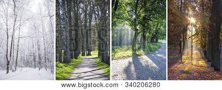 Collage Seasons . All Season. Seasons In One Photo. Winter Spring Summer Autumn. Tree Branch. Grass