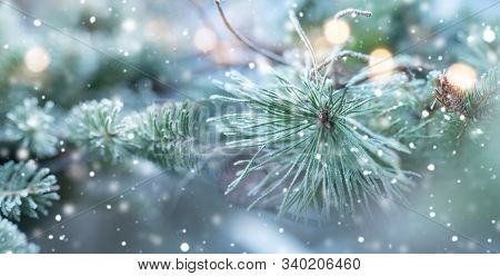 Fir Tree In Natural Winter Scenery With Snowflakes And Festive Golden Bokeh For A Holiday Concept. B
