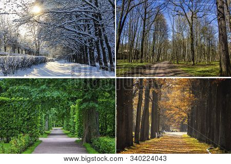 Collage Seasons . All Season. Seasons In One Photo. Winter Spring Summer Autumn. Tree Branch. Grass