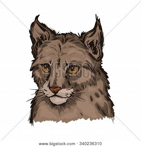 Eurasian Lynx Baby Tabby, Medium-sized Wild Cat From Europe Isolated Sketch. Vector Illustration Of