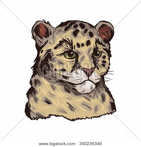 Leopard Babby Tabby Vector Portrait Of Exotic Animal Isolated Sketch. Panther Looking Aside. Felidae