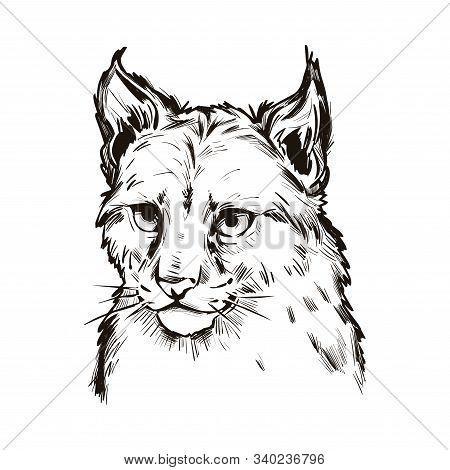 Eurasian Lynx Baby Tabby, Medium-sized Wild Cat Isolated Sketch T-shirt Print, Monochrome Design. Ve