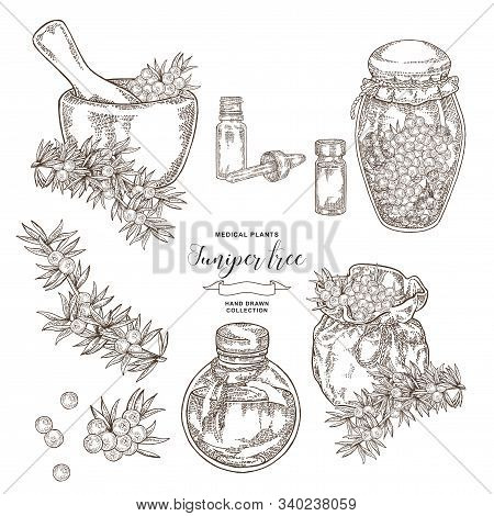 Juniper Tree Branch. Berries Of Juniper With Glass Bottles And Jars. Hand Drawn Medical Plants. Vect